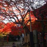 庭の紅葉と日本建築がとてもキレイ