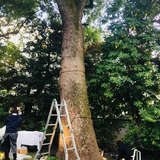 午前の式の方はこの木をつかわれたそう