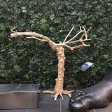 高砂席にも置けるコーヒーの木