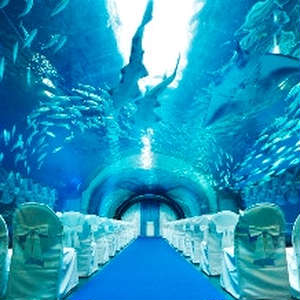【朝の水族館を貸し切り】アクアリウムウエディングセレモニー