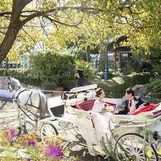 愛媛県初ウェディング馬車演出付きプラン
