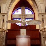 フクロウによる感動の演出、 <アウルセレモニー> 牧師の呼びかけにこたえ、 〝しあわせを運ぶ鳥〟フクロウがリングを運びます