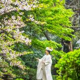 春は桜。白無垢姿は映える
