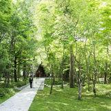 清らかな緑と木立に包まれる軽井沢高原教会。爽やかな風と木漏れ日がふたりを包み込む