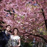 桜の日比谷公園も素敵です