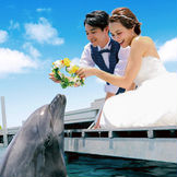 挙式後にイルカと記念撮影