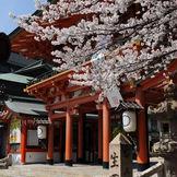 生田神社境内にあります桜のお写真です。
