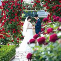 【レッドローズガーデン】 3万輪のバラに囲まれ、誓いの瞬間を