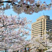 春には満開の桜が。前撮りのロケーション撮影にオススメ♪