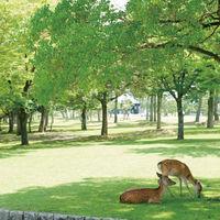 すぐ近くには猿沢池と奈良公園が…♪披露宴の帰りに奈良を観光していただける立地も魅力★
