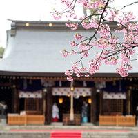鳥居前には桜が咲きます