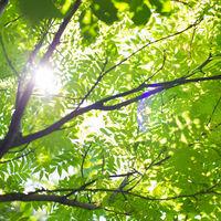 まばゆい光のプリズムが揺れる美しい緑のガーデン