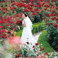 【レッドローズガーデン】 360度深紅のバラに囲まれたフォトジェニックなガーデン