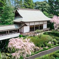 桜の時期の神殿