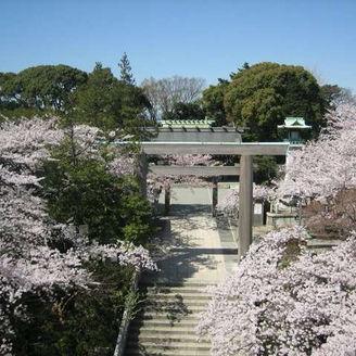 伊勢山の紋章は、桜。 毎年4月の結婚式は、1年前から予約が殺到してます。文化と季節を感じられるのも、神社結婚式ならではですね。