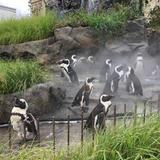 オプションでペンギンが出迎えてくれる