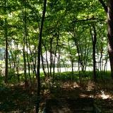 軽井沢の森林