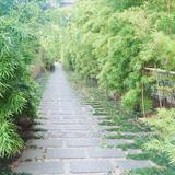 竹の道です。和装が映えます