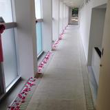 チャペルへのバラの花道