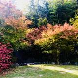 紅葉がとても素敵でした。