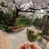 桜とシャンパン
