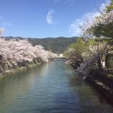 参道の桜が満開でした