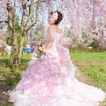 桜の下でロケ撮影