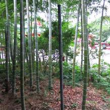本堂まわりにある竹林