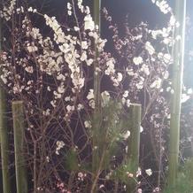 サクラの花を咲かせてくれました