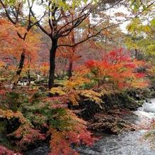 紅葉の時季の庭園5