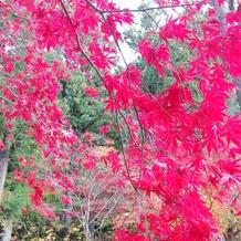 紅葉の時季の庭園10