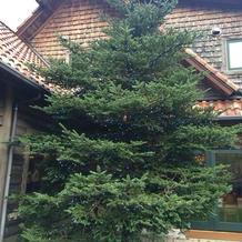 クリスマスツリーの演出
