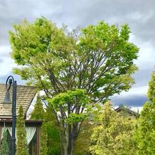 大きい木がハートで可愛い!