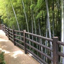 竹林が広がっています。