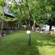 奈良公園の鹿も来てましたよ