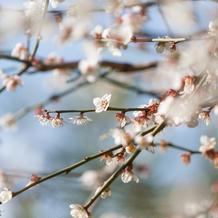 桜もありました