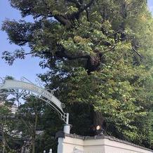 樹齢100年を超える木
