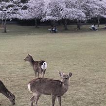 奈良公園が近いので前撮りも良かったです
