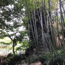 ガーデンフォレスト入口途中の竹林