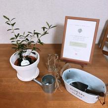 オリーブの植樹式