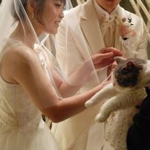 猫が指輪を持ってきた