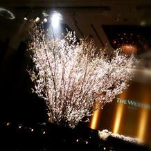 本物の桜の木だそうです