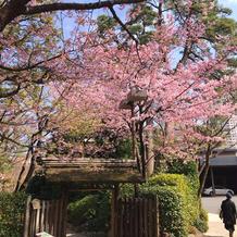 2月は早咲きの桜が庭園に咲いて綺麗