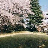 春には桜が満開に