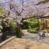 桜が満開でした!