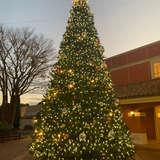 クリスマスシーズンに出るクリスマスツリー