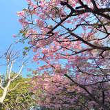 3月上旬ガゼボ撮影の際、梅が満開でした。