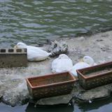 池にアヒルさんがいて、心が和みます。