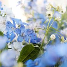冬なのでデルフィニウムで装花