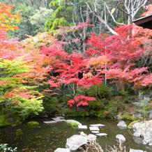 秋の日本庭園の様子です(前撮り時)